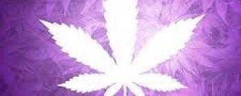 Urkle Has A Cannabis Line!